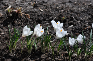 Весна началась.