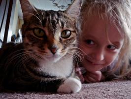 Что вы знаете про глаза кошек?