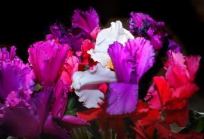 Цветочное пламя