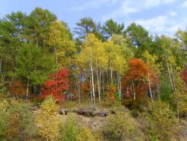 Начало октября радует красками