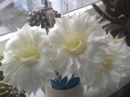 Дружное цветение