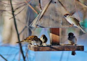 Птичья столовая ...
