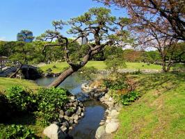 На фоне японской сосны