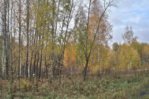 прозрачная осень