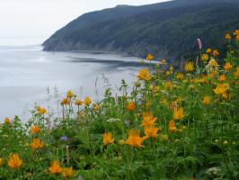 Лето- это цветущие поляны