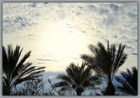 Небо и пальмы (лучше смотреть в увеличении)
