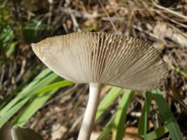 Лето- это грибы