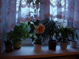 7-45 утра, новый цветок