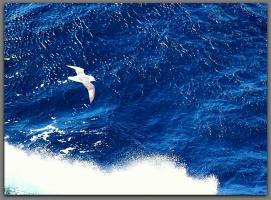 В блеске моря крылья чайки и бездонна синева...