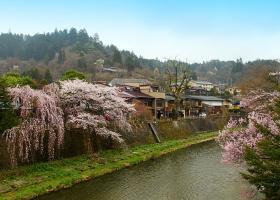 Ветвями сакуры окутав берега, бежит река...