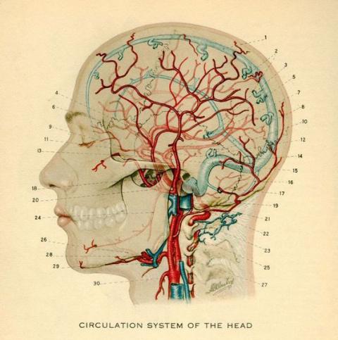 Как научить мозг ничего не забывать?
