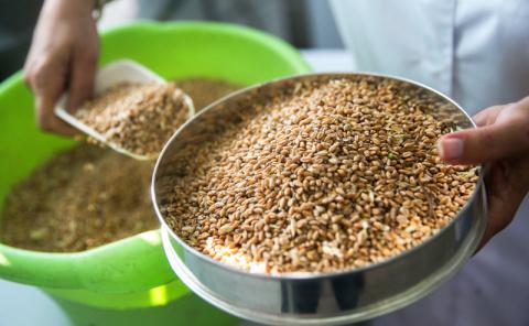 Власть кормит россиян бумажным зерном и химическими продуктами