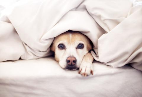 Основные ошибки неопытных собачников