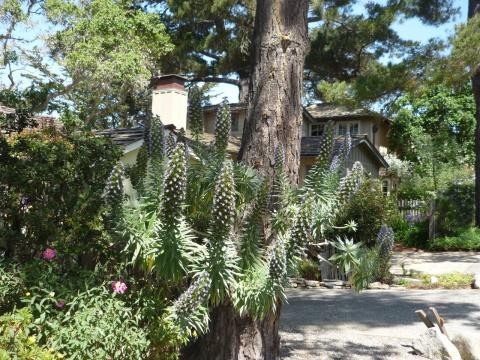 Калифорния. Курортные городки Carmel и Monterey.