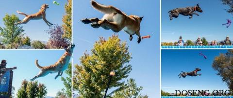 Соревнования по прыжкам в дл…