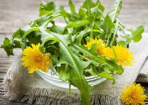 Салат из одуванчиков - полезно и вкусно! Как сделать любое мясо божественно мягким