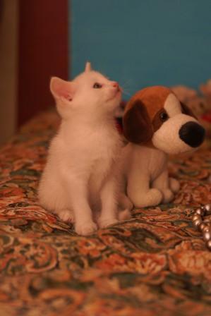 Двухмесячная кошечка ищет дом