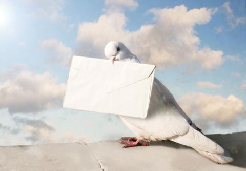 Интересные факты о голубиной почте