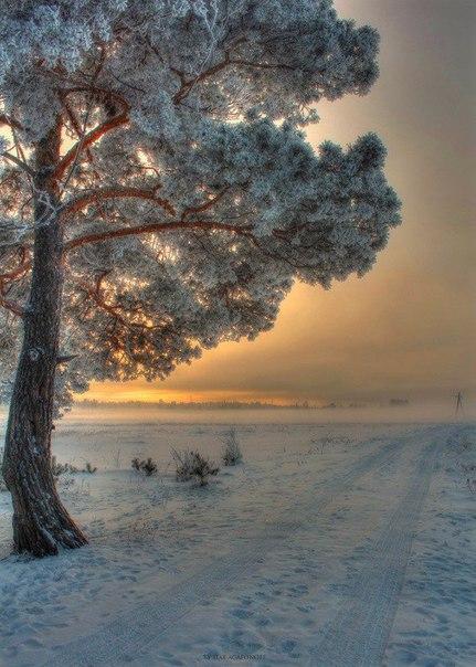 Одним морозным зимним утром...