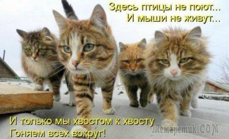 Кошаки и философия;))