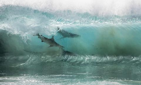 На несчастных школьников внезапно напало 4 сотни акул: реальное видео