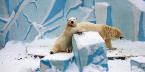Инстаграм недели: новосибирский зоопарк под снегом