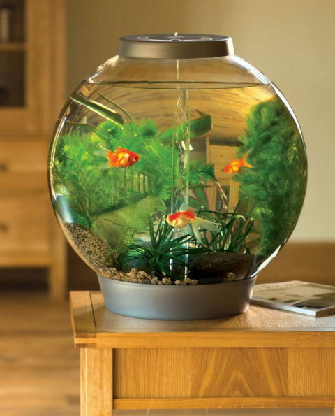 Элементы декора! Круглый аквариум