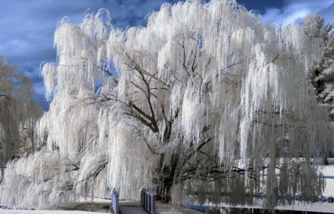 10 редких природных зимних явлений, в  реальности которых можно усомниться