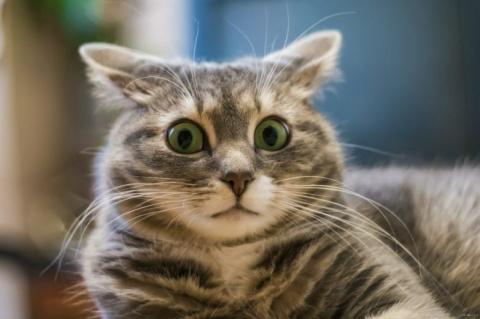 стерилизация для кошки