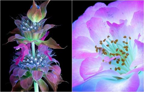 10 волшебных фотографий цвет…