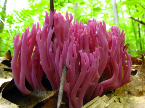 О необычных грибах...