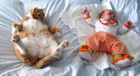 Каждому ребёнку нужен кот!