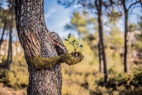 Human Nature: когда деревья …