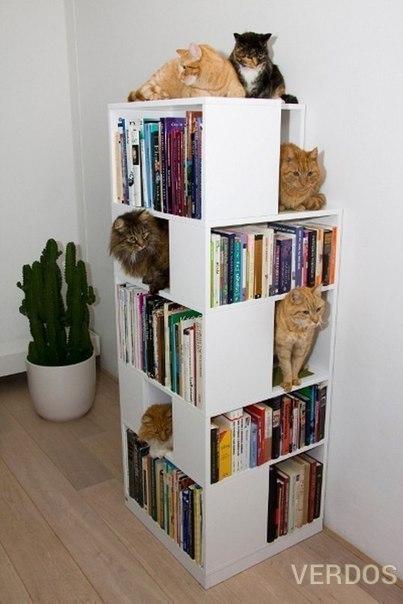 Книжный шкаф для себя и котов