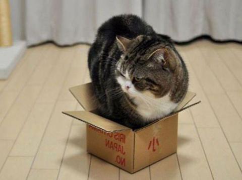 САМОупаковывающиеся коты!