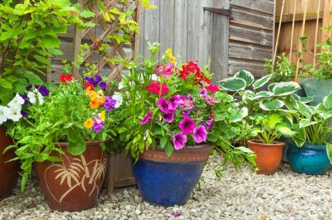 Зачем вывозить комнатные растения на свежий воздух