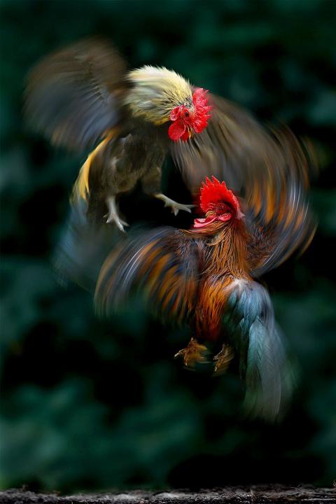 Красивые фотографии животных от фотографа Sam Lim