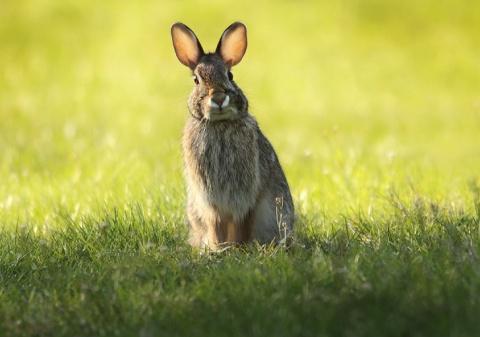 История про зайцев или как н…