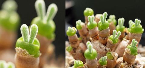 Необычные растения в виде кр…