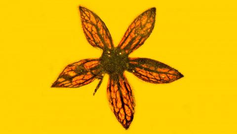 Цветы возрастом в 100 миллио…