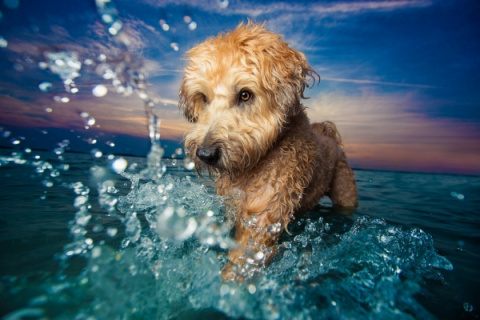 Лучшие снимки собак с фотоко…