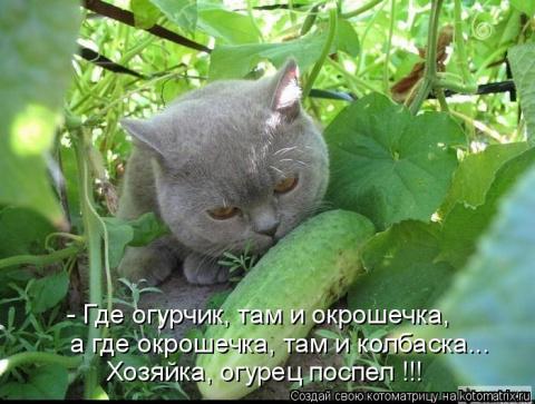 http://mtdata.ru/u1/photo1AE6/20130470688-0/big.jpeg#20130470688