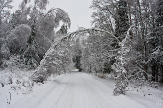 Три похода в лес зимой с ноч…