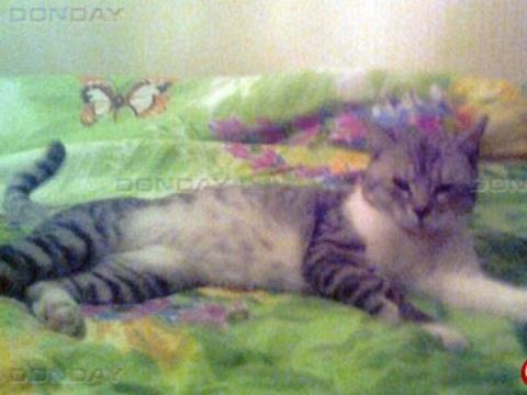 Спасенный из водопроводной шахты кот из Новочеркасска нашел семью