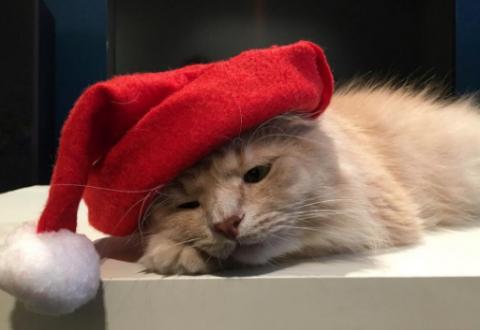 Грустный котик из России стал звездой интернета