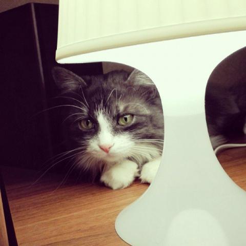 Кот Семён сам нашел нас. Но …