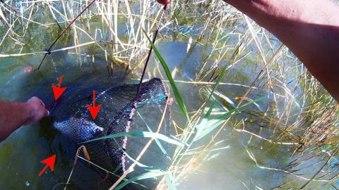 Рыбалка на вершу-мордву Вот это улов большая рыба