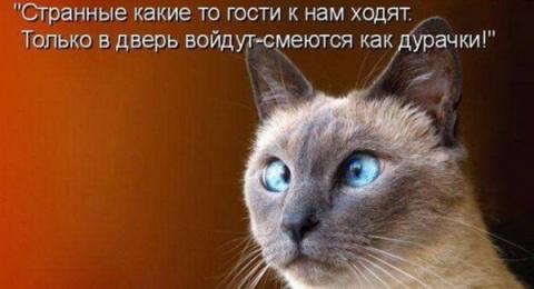 Минутка позитива))