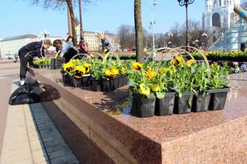 На улицах Калининграда начал…