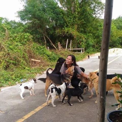 Бродячая собака приносит разные подношения женщине, которая ее кормит